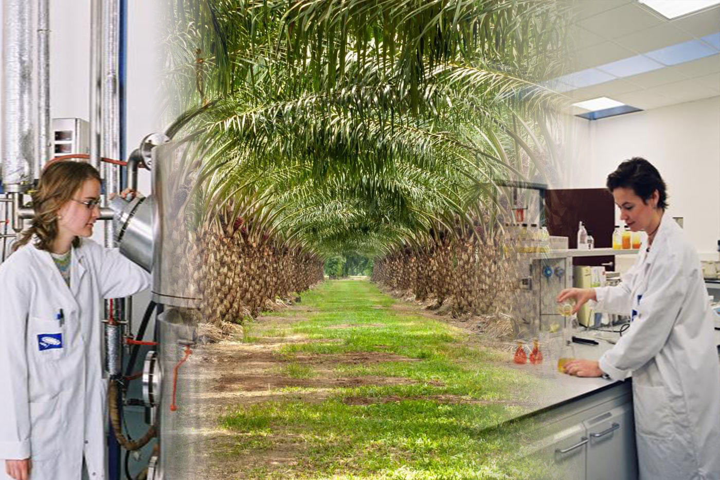 Towards a Sustainable Palm Oil Industry: Managing Downstream Sector