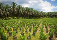 Palm Oil Best Practice Workshop 2019